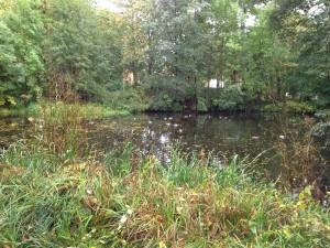 Kleiner Spreewaldpark - natürlich pestizidfrei