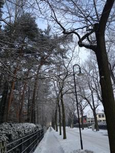 Alleen bald wieder ohne Lücken? Baumpatenschaften machen es möglich.