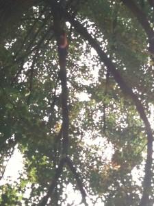 Eiche in der Waldstr.